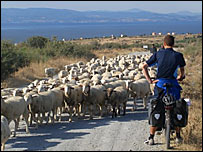 Richard Mason meets a flock of sheep on road in Turkey