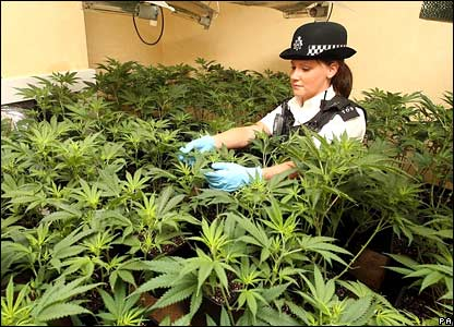 PC Chloe Snell, 21, examines a suspected cannabis factory in a house in Dagenham, east London