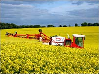 Field of oil seed rape