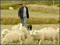 Farmer and sheep on Bardsey