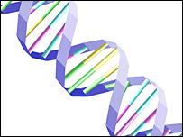 DNA  Image: BBC