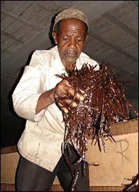 A worker sifts vanilla beans in Grande Comore