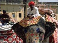 Man riding ceremonial elephant