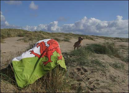 Tyson the dog at Cefn Sidan Beach, Pembrey, as sent by Andrew Budden from Cross Hands