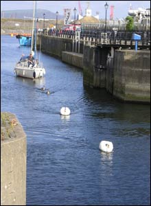 Swans leading the way in Swansea marina, as taken by Miguel Vaz Júnior from Brazil during a short visit to Swansea