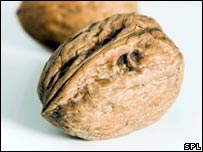 Walnut