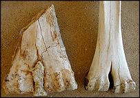 Camel bones, Jean-Marie Le Tensorer