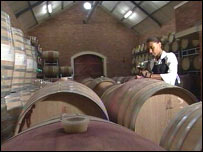 Wine barrels at South African vineyard