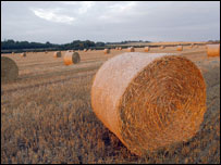 Bale of hay (Image: BBC)