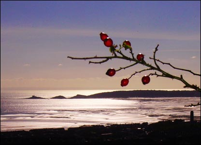 """Rob Stradling called this shot """"Berry Bay"""""""