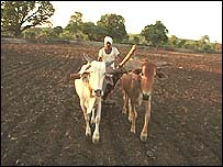 A farmer in Vidarbha region