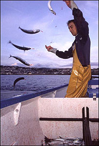 Fisherman using a hand-line to catch mackerel (Image: MSC)