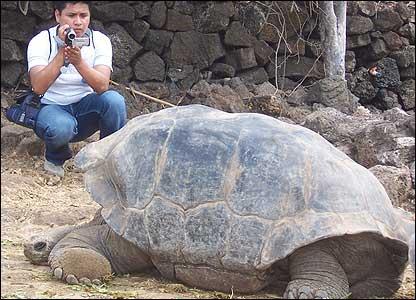 Tortuga gigante en las Islas Galápagos