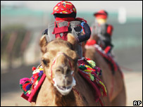 Robot jockeys on camels in Kuwait