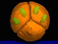 Imagen computarizada de célula de fósil