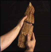 "The ""cricket bat""   Image: BBC/Natural History Museum"