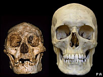 Homo floresiensis (l) and Homo sapiens (r)   Image: PA