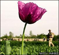 Poppy in Afghanistan