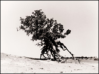 Drought-affected tree in Mali (Stuart Redler)