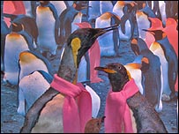 Penguins at the Oslo Natural History Museum. Photo: Per Aas/NHM-Oslo