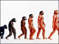 Evolution from ape to human
