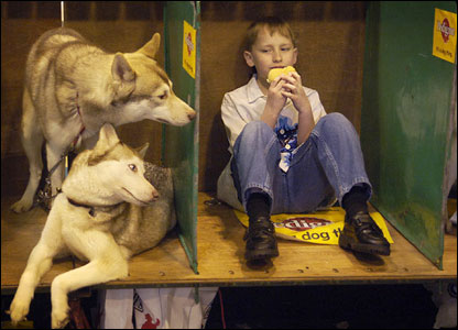 Two dogs watch a boy eating at Crufts dog show