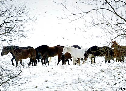 Horses in the snow in April. Large parts of the South East were hit by