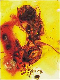 Melittosphex burmensis  Image: Science