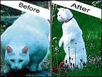 Willie the cat - before and after his slimming