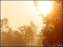 The sun shining through some trees
