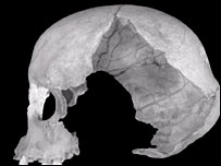 Muierii 1 skull  Image: PNAS