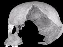 Muierii 1 skull  Image: PNAS