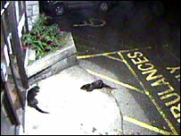 Otters outside Broadford Hospital, Isle of Skye