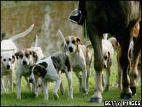 Fox hounds (generic)