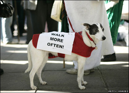 Dog with a 'walk more often' sign on its back