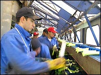 Many migrant workers are employed in food processing