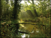 Moor Copse Nature Reserve, courtesy of Jim Asher