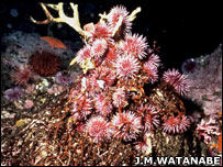 Sea urchins (James M. Watanabe)