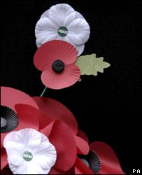 A red and white poppy