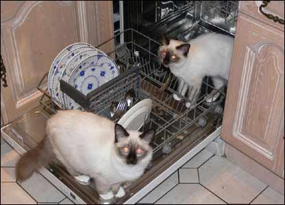 Woody and Pippa helping load the dishwasher (Nick Morgan from Caerleon)
