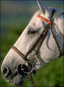 Desert Orchid pictured in 1988