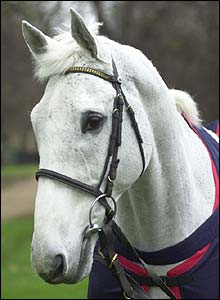Desert Orchid pictured in 2000