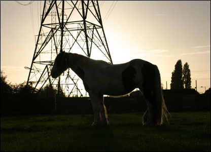 A horse on Hackney Marsh in the late afternoon sun