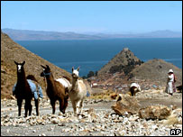 Llamas in the Bolivian highlands