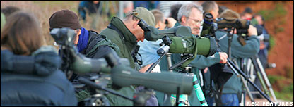 Dawlish birdwatchers