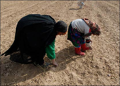 Maryam and her granddaughters collect small sticks in Herat province