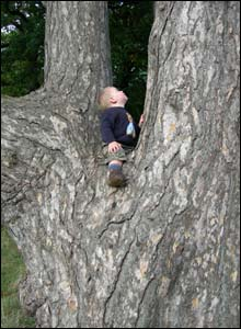 Mark Young's son Mackenzie sat in his favourite tree at Heath Park, Cardiff