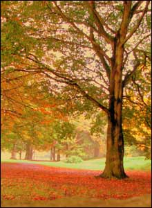 Autumnal views in Caldicot Castle park, sent by Terry Winter
