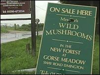 Brigitte Tee-Hillman's mushroom sign