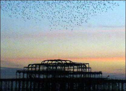 Birds over Brighton Pier - pic by Matt Fox